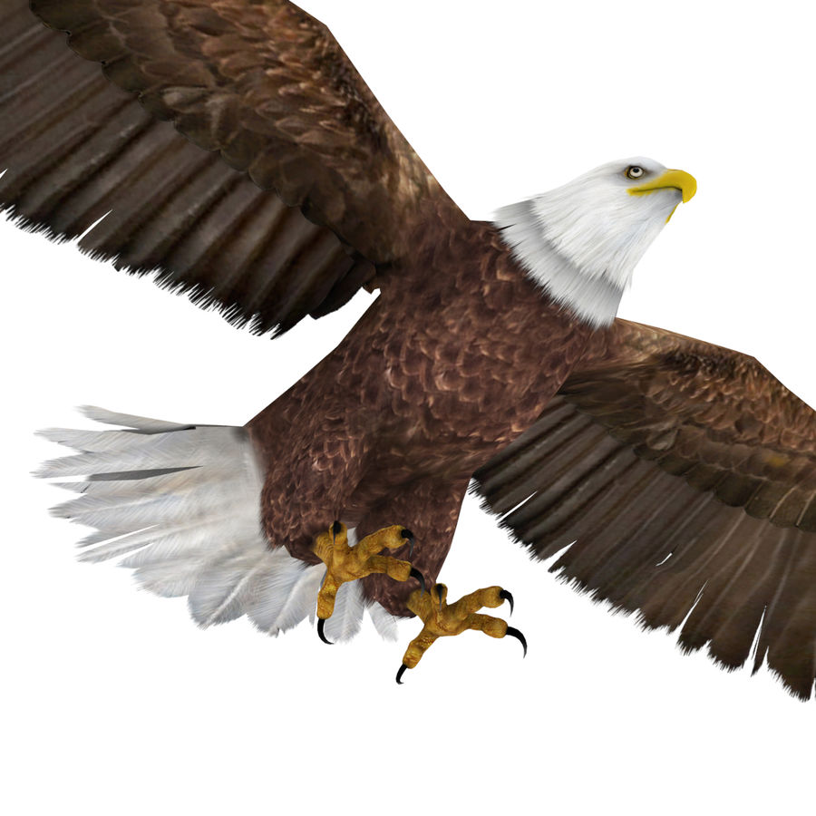 Bald Eagle royalty-free 3d model - Preview no. 4