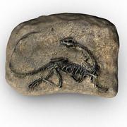 T-rex fossil 3d model