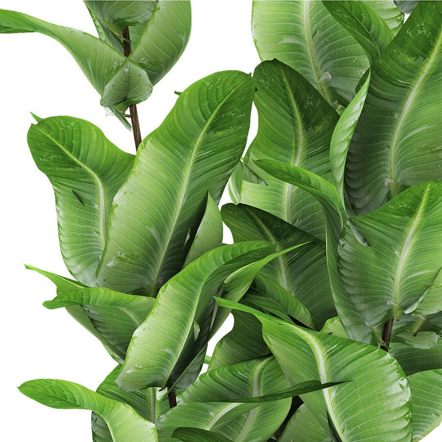 Roślina w doniczce Doniczka Roślina egzotyczna royalty-free 3d model - Preview no. 3
