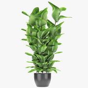 Plante en pot Pot exotique 3d model