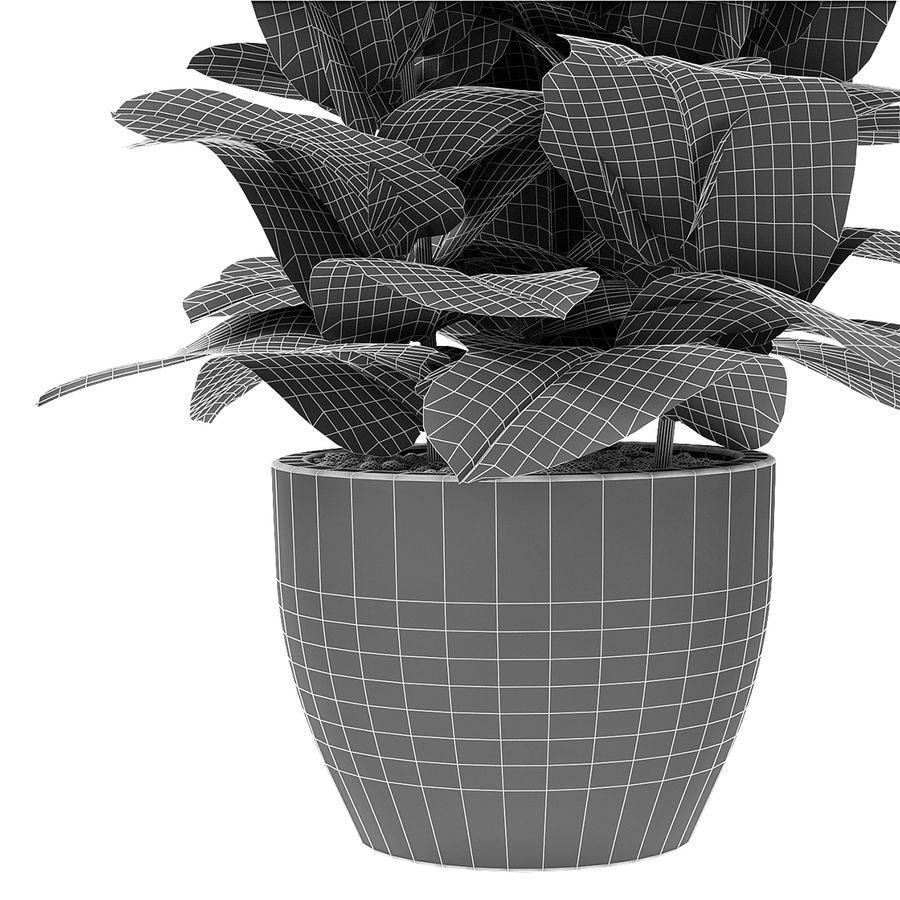 Roślina w doniczce Doniczka Roślina egzotyczna royalty-free 3d model - Preview no. 7