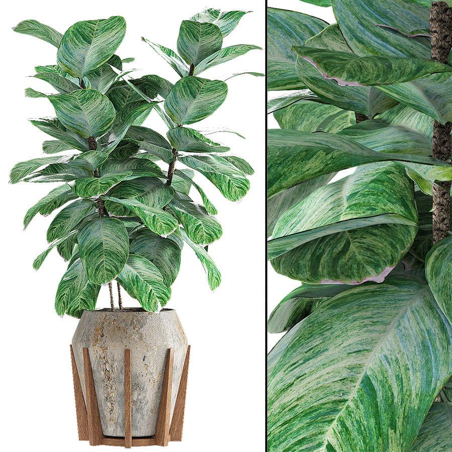 Roślina w doniczce Doniczka Roślina egzotyczna royalty-free 3d model - Preview no. 2