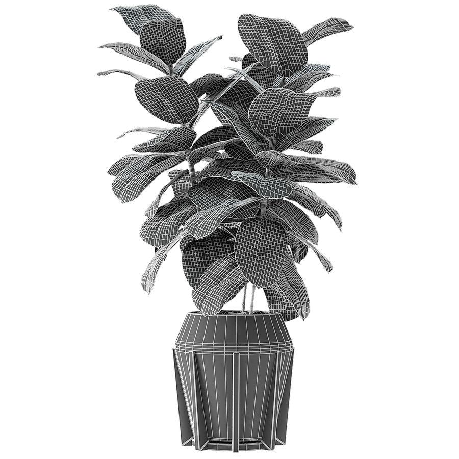 Roślina w doniczce Doniczka Roślina egzotyczna royalty-free 3d model - Preview no. 6