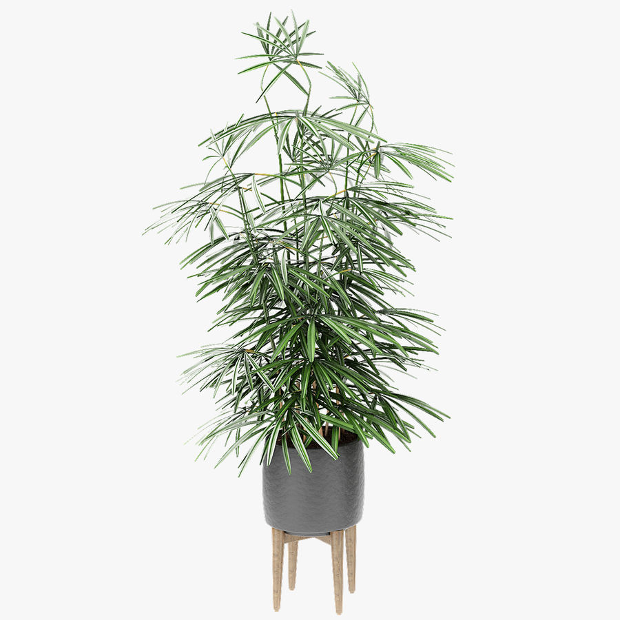 Plant in de exotische plant van de pottenbloempot royalty-free 3d model - Preview no. 1