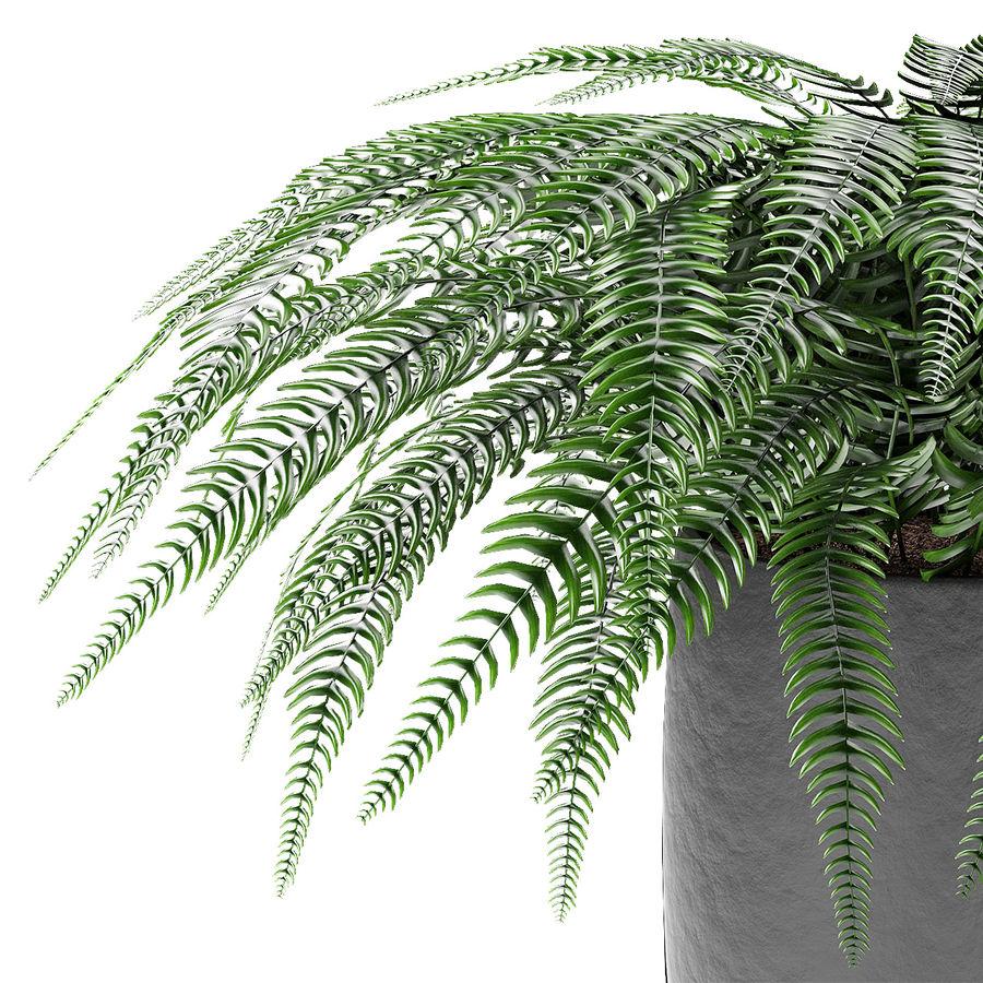 Растение в горшке Цветочный горшок Экзотическое растение royalty-free 3d model - Preview no. 3