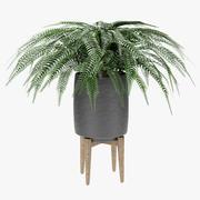 Roślina w doniczce Doniczka Roślina egzotyczna 3d model