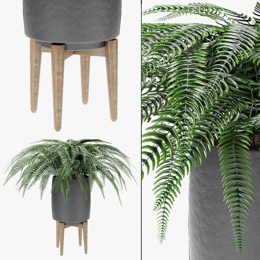 Растение в горшке Цветочный горшок Экзотическое растение royalty-free 3d model - Preview no. 2