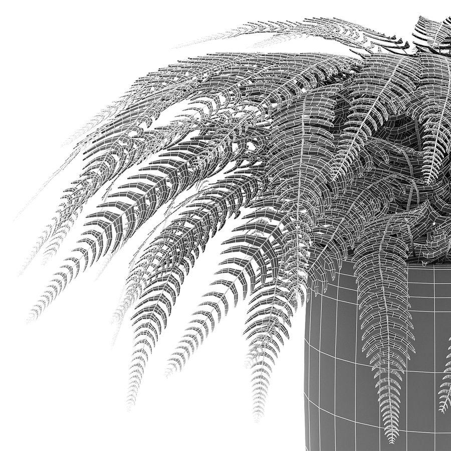 Растение в горшке Цветочный горшок Экзотическое растение royalty-free 3d model - Preview no. 6