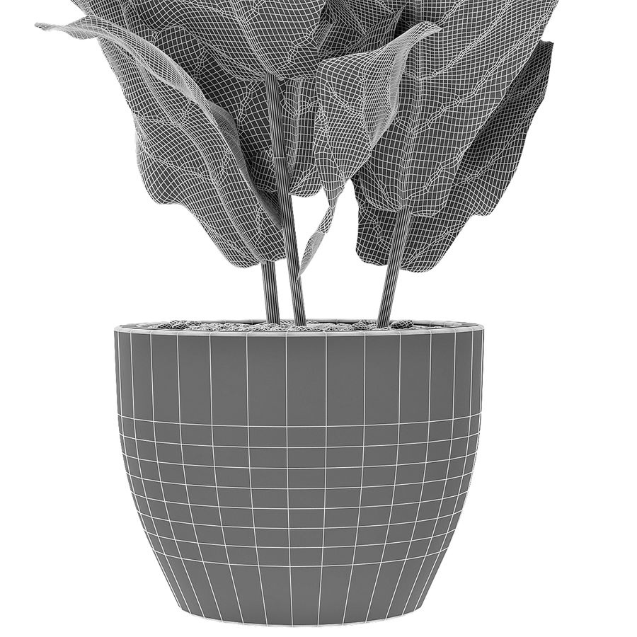 Planta em vaso de plantas exóticas royalty-free 3d model - Preview no. 7