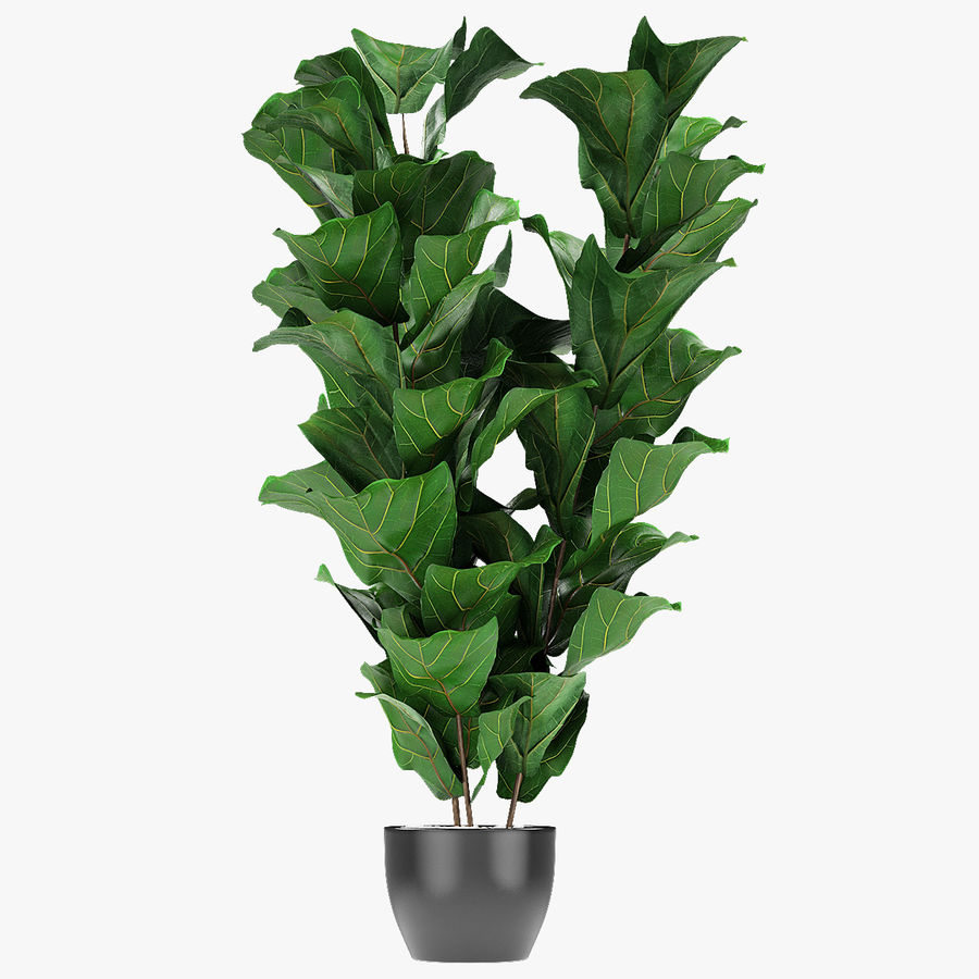 Planta em vaso de plantas exóticas royalty-free 3d model - Preview no. 1