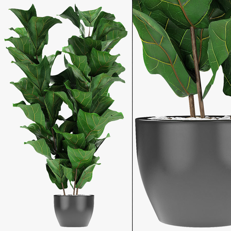 Planta em vaso de plantas exóticas royalty-free 3d model - Preview no. 2