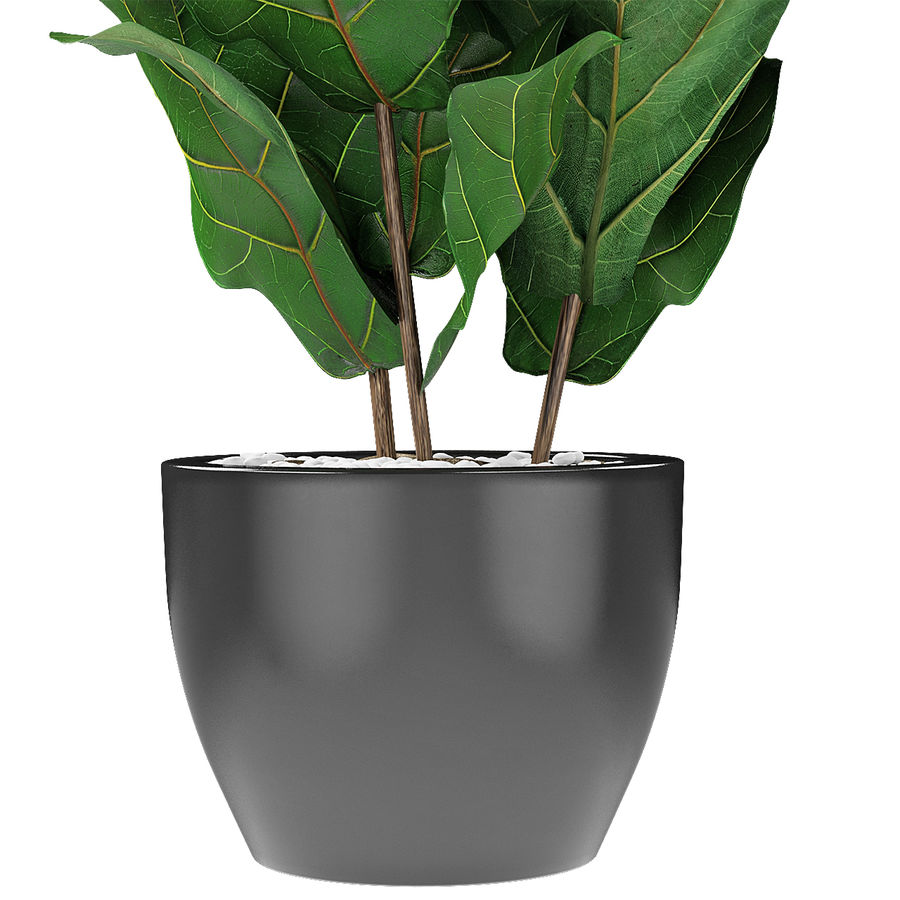 Planta em vaso de plantas exóticas royalty-free 3d model - Preview no. 4