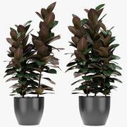 盆栽花盆异国植物中的植物 3d model