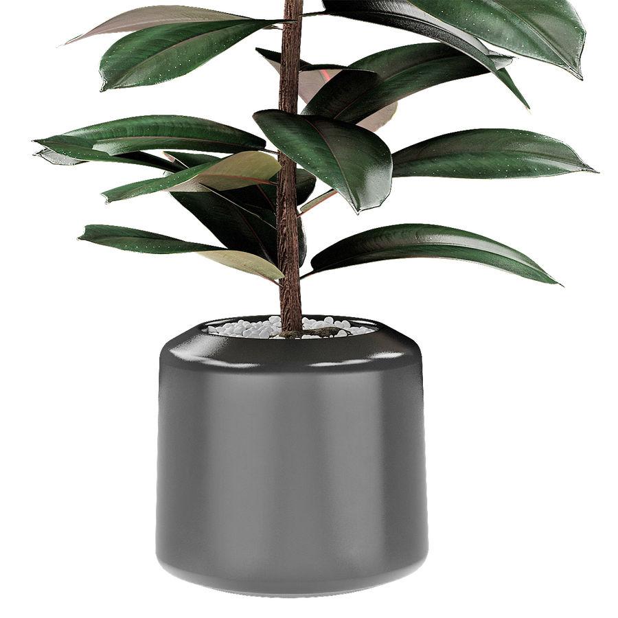 Plant in de exotische plant van de pottenbloempot royalty-free 3d model - Preview no. 3