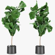 Растение в горшке Цветочный горшок Экзотическое растение 3d model