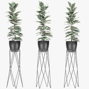 Plant in Pot Flowerpot Exotic Plant 3d model