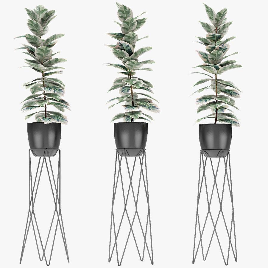 Roślina w doniczce Doniczka Roślina egzotyczna royalty-free 3d model - Preview no. 1