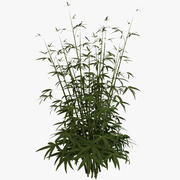 Jeune bambou 3d model