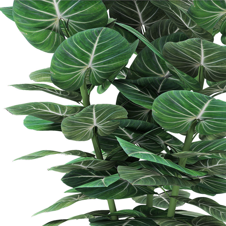 Plante dans un pot de plantes exotiques royalty-free 3d model - Preview no. 3