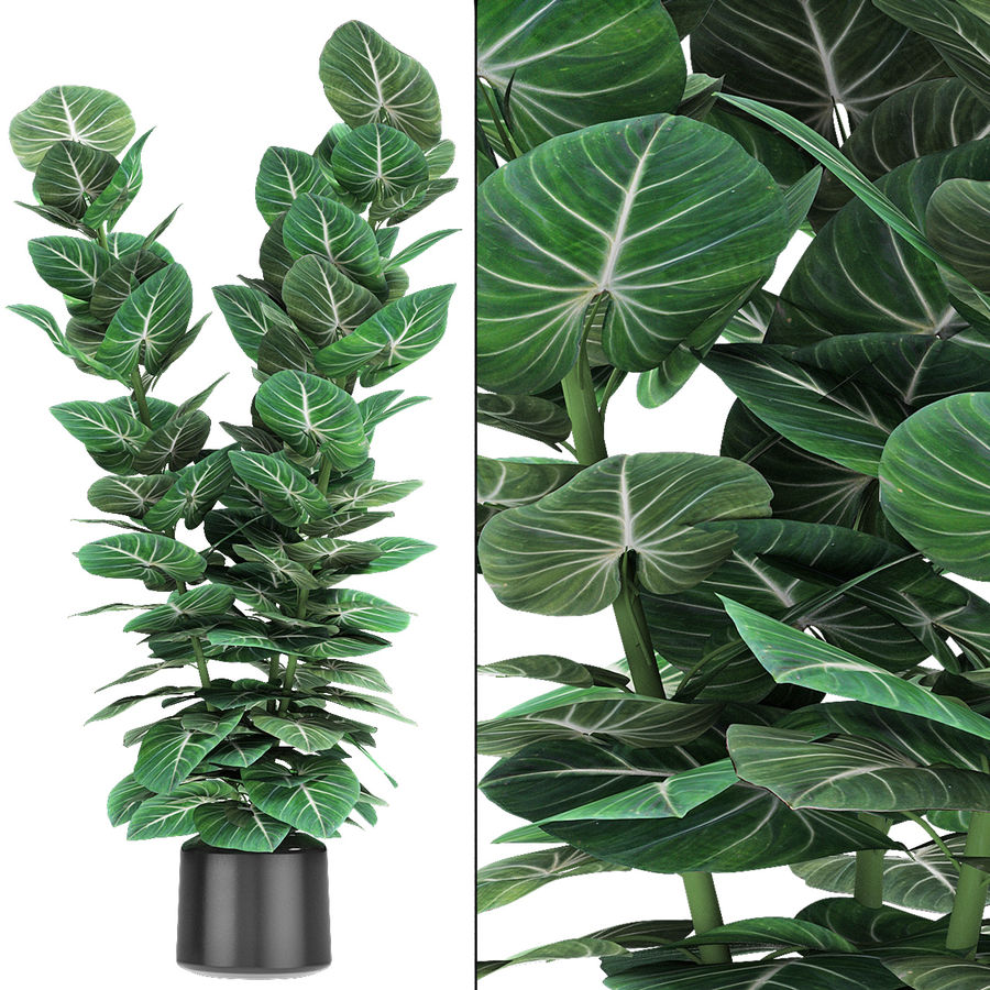 Plante dans un pot de plantes exotiques royalty-free 3d model - Preview no. 2