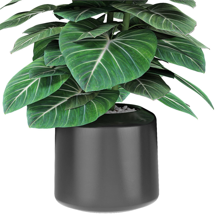 Plante dans un pot de plantes exotiques royalty-free 3d model - Preview no. 4