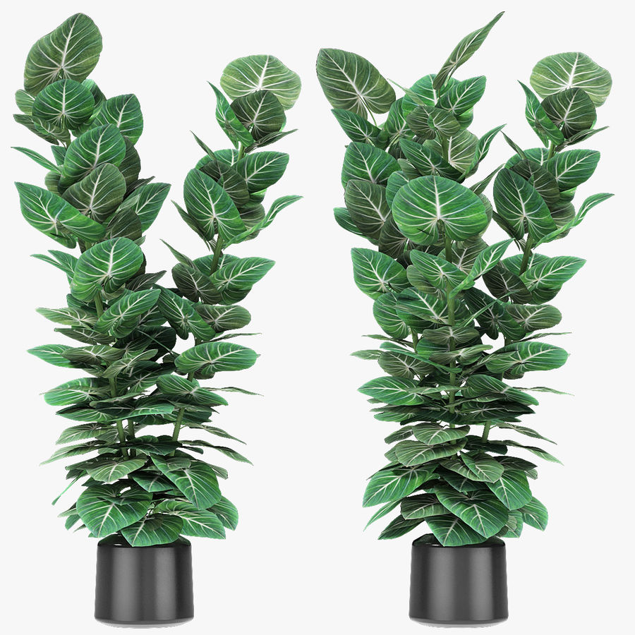 Plante dans un pot de plantes exotiques royalty-free 3d model - Preview no. 1