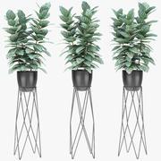 Plante dans un pot de plantes exotiques 3d model