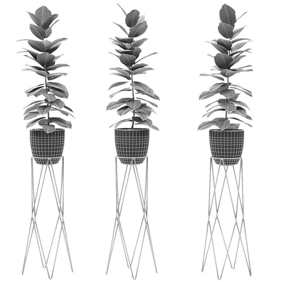 盆栽花盆异国植物中的植物 royalty-free 3d model - Preview no. 5