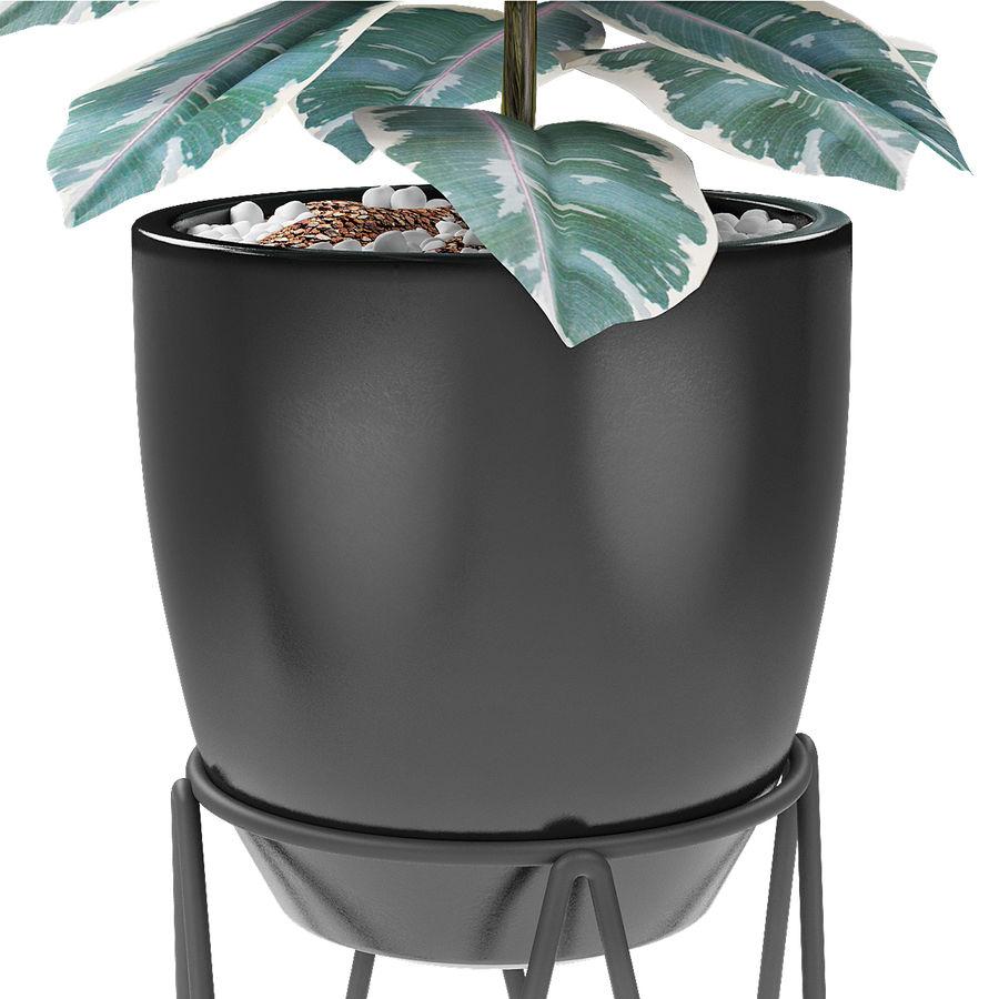 盆栽花盆异国植物中的植物 royalty-free 3d model - Preview no. 4