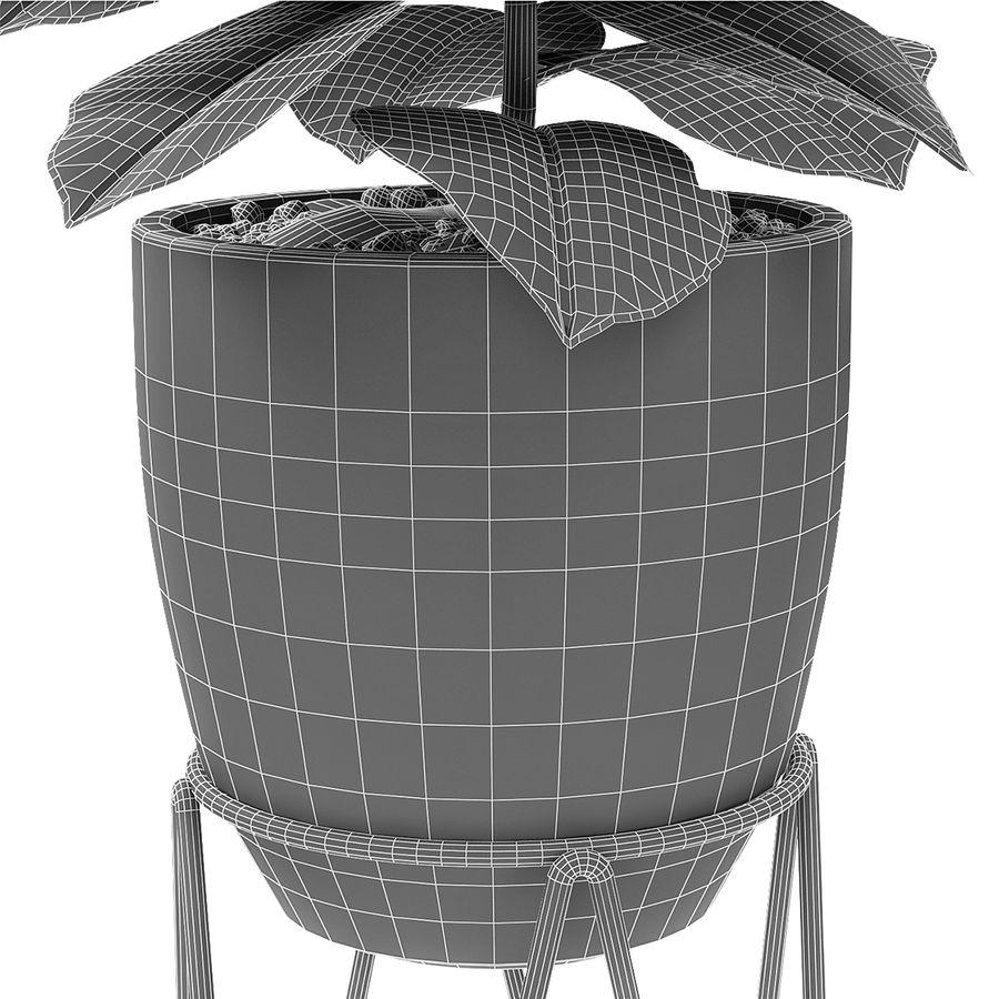 盆栽花盆异国植物中的植物 royalty-free 3d model - Preview no. 7