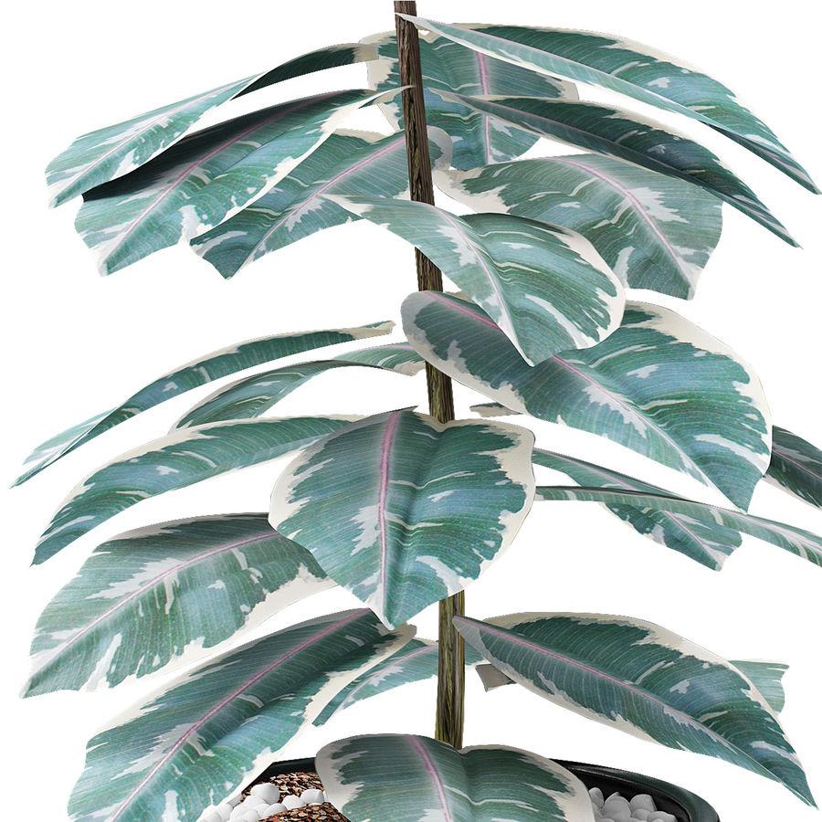 盆栽花盆异国植物中的植物 royalty-free 3d model - Preview no. 3