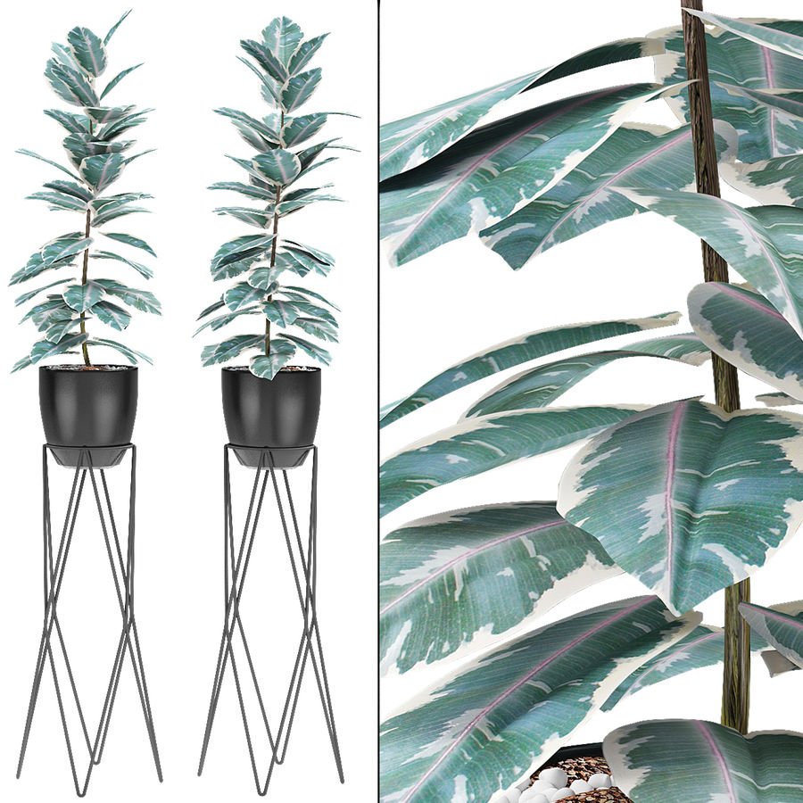 盆栽花盆异国植物中的植物 royalty-free 3d model - Preview no. 2