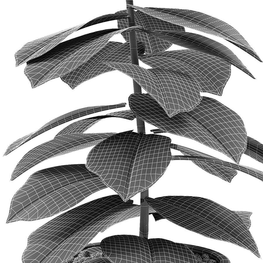 盆栽花盆异国植物中的植物 royalty-free 3d model - Preview no. 6