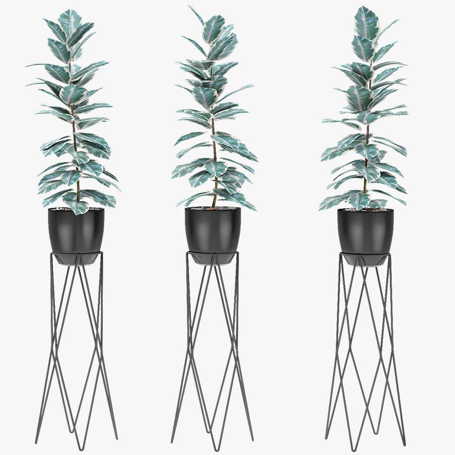 盆栽花盆异国植物中的植物 royalty-free 3d model - Preview no. 1