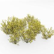 Grappe de plantes à balais 3d model