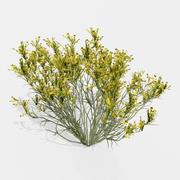 扫帚草植物 3d model
