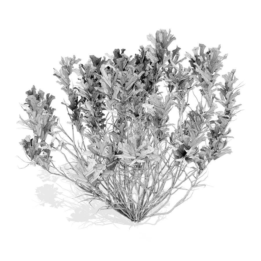 扫帚草植物 royalty-free 3d model - Preview no. 5
