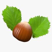 헤이즐넛 잎 3d model