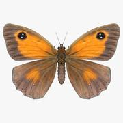 Meadow Brown 3d model