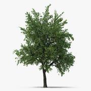 Yaz Armut Ağacı 3d model