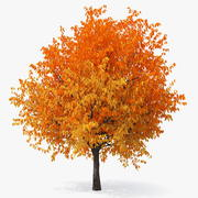 秋の桜 3d model
