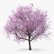 꽃 벚꽃 나무 3d model