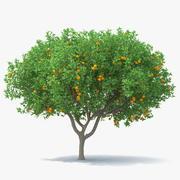 Orangenbaum mit Früchten 3d model