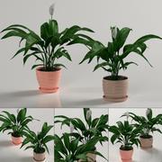 Plantas de interior: Spathiphyllum 3d model