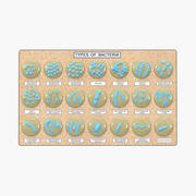 Bacteria Types Board 3d model