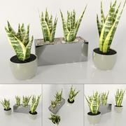 Indoor plants: Sansevieria 3d model