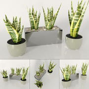 Indoor plants: Sansevieria 3d model