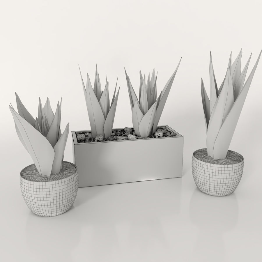 Indoor plants: Sansevieria royalty-free 3d model - Preview no. 6