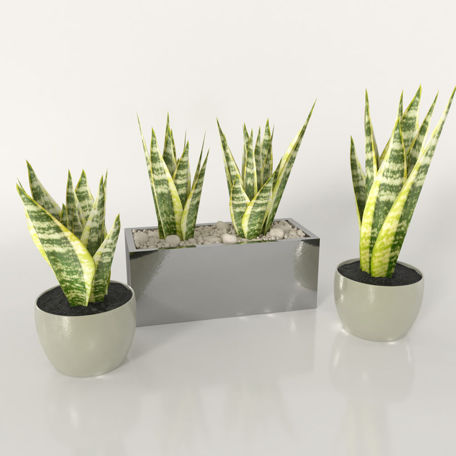Indoor plants: Sansevieria royalty-free 3d model - Preview no. 2