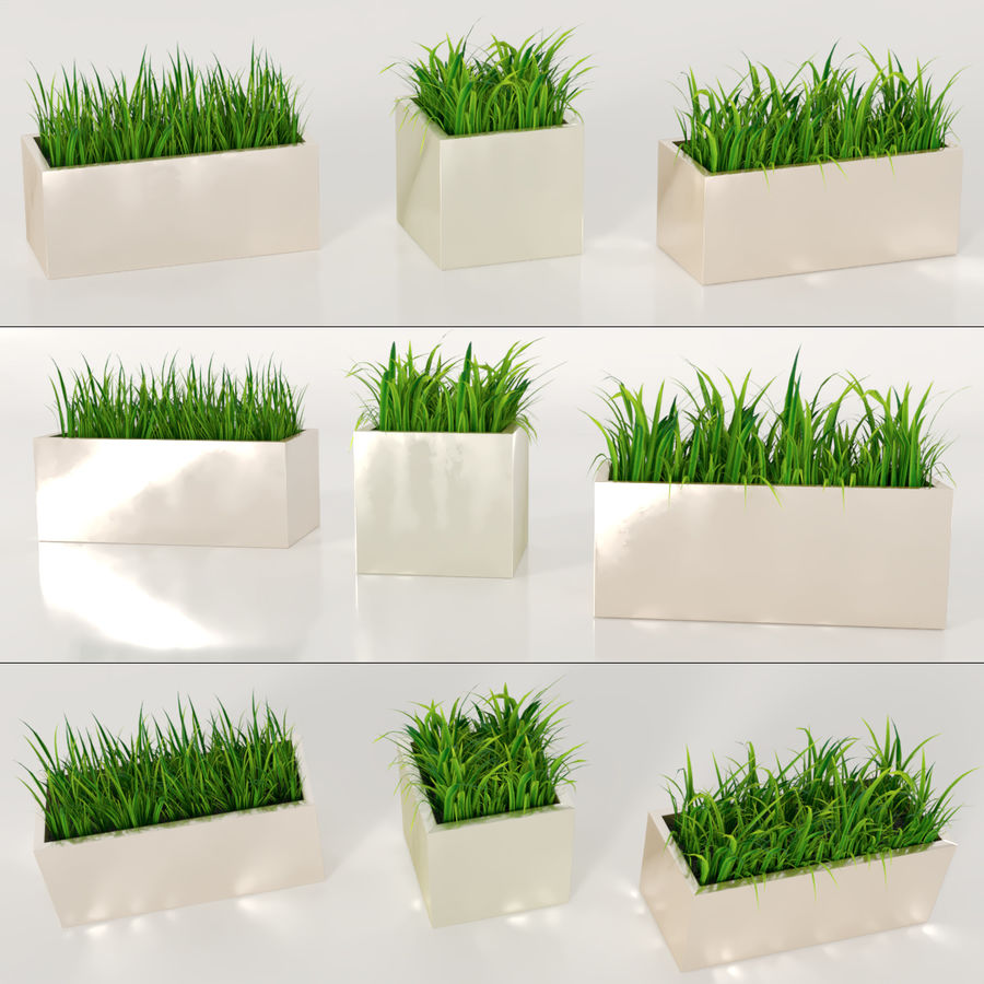 Indoor Plants: Potted Grass royalty-free 3d model - Preview no. 1